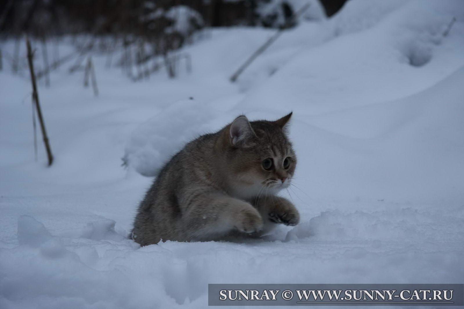 Зимняя весна картинки 5