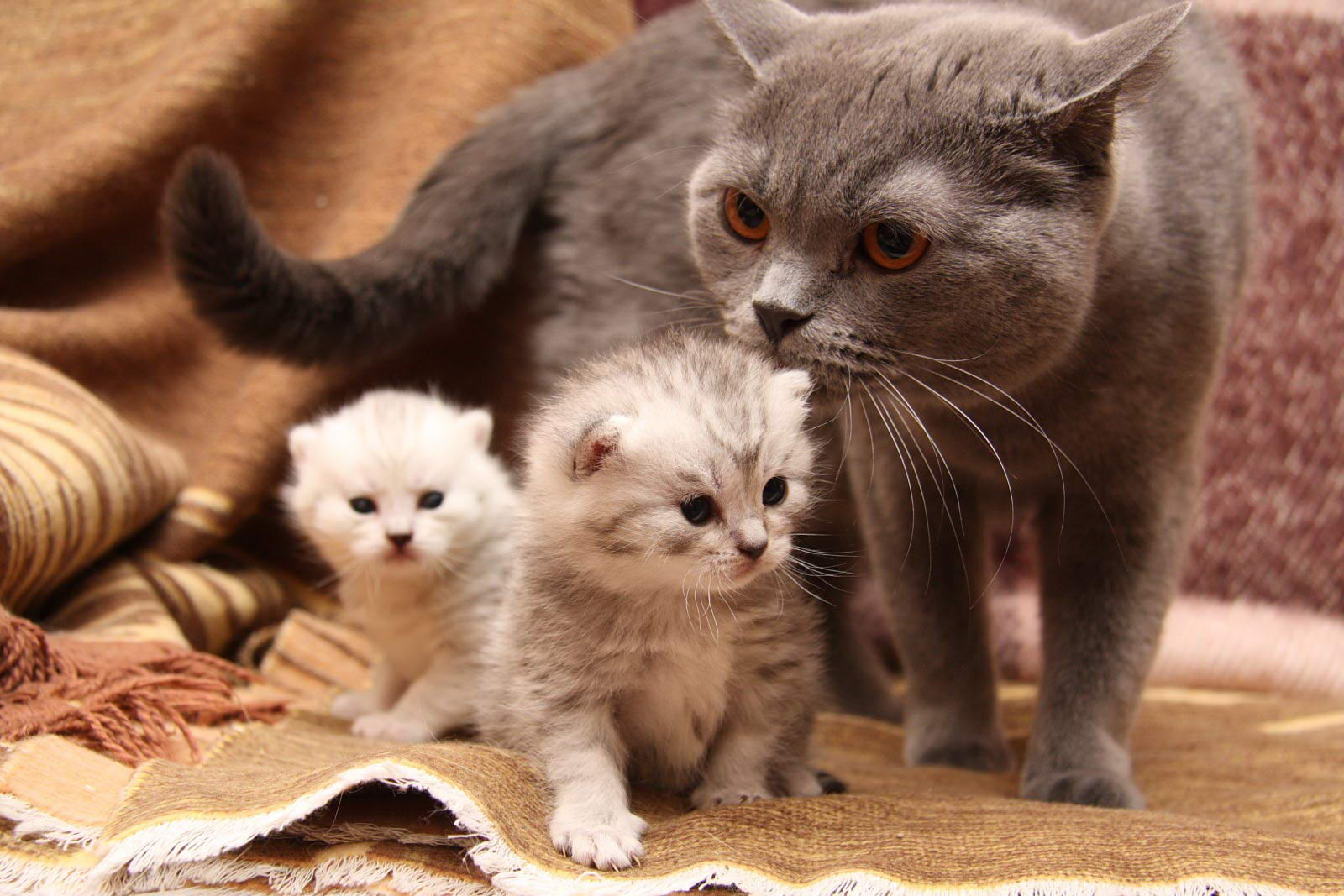 Кошка с котятами Фото кошек №2091 - SunRay