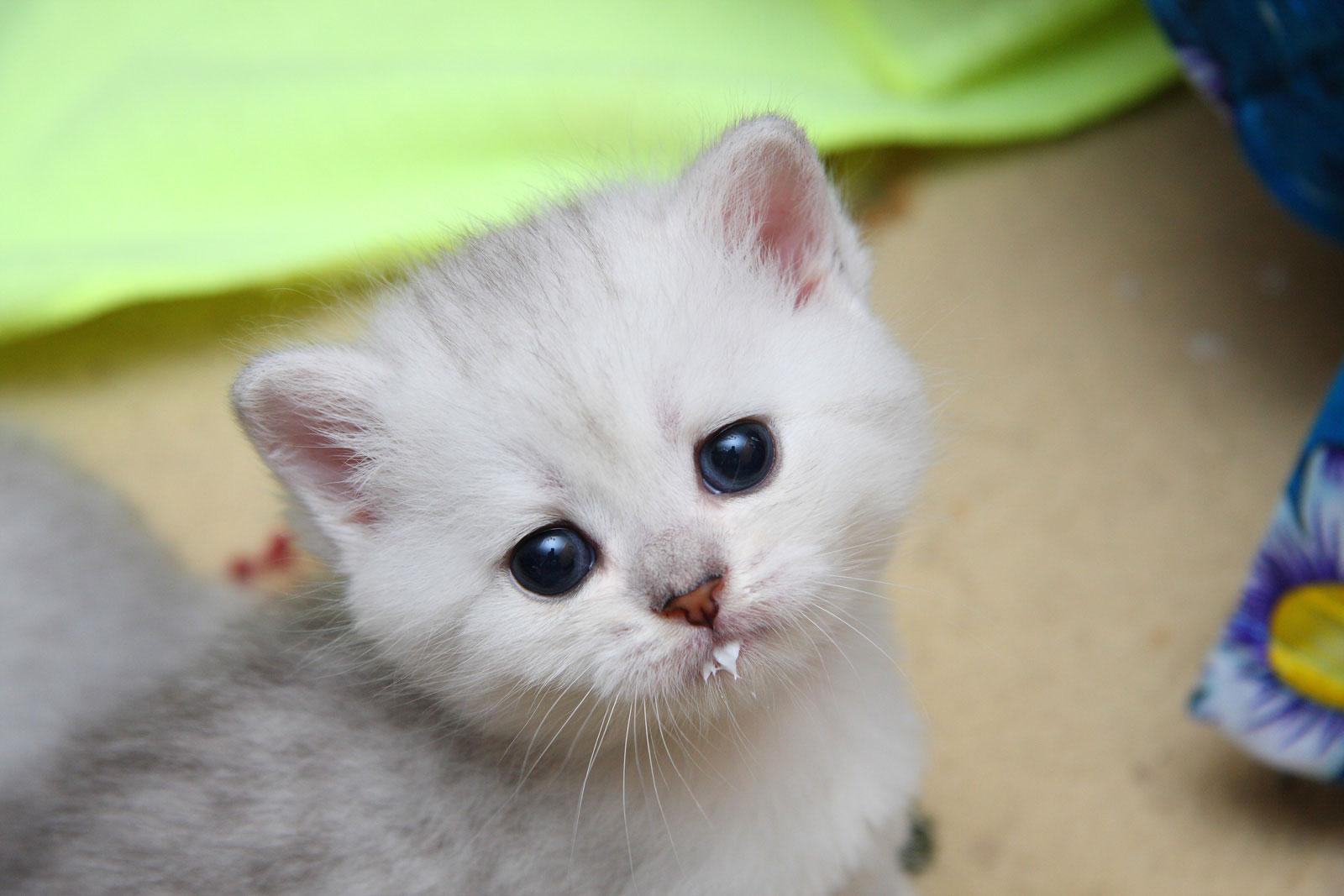 у кота запах изо рта причины