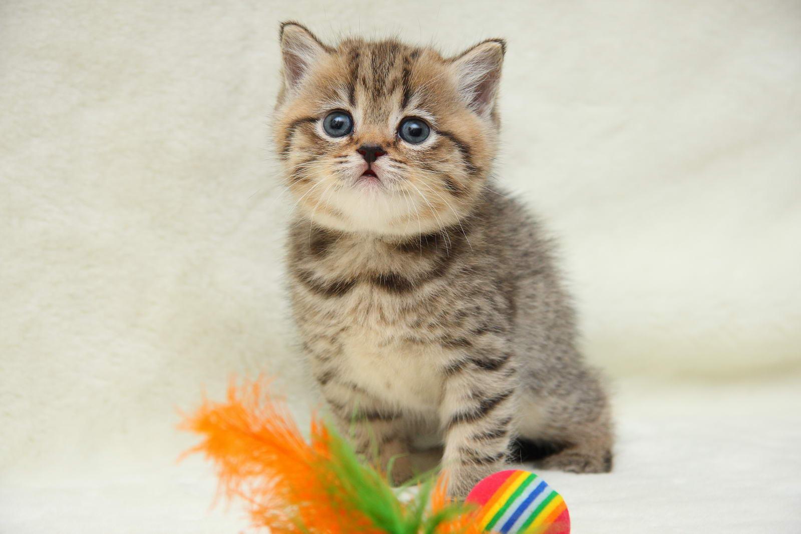снупи фото котенок