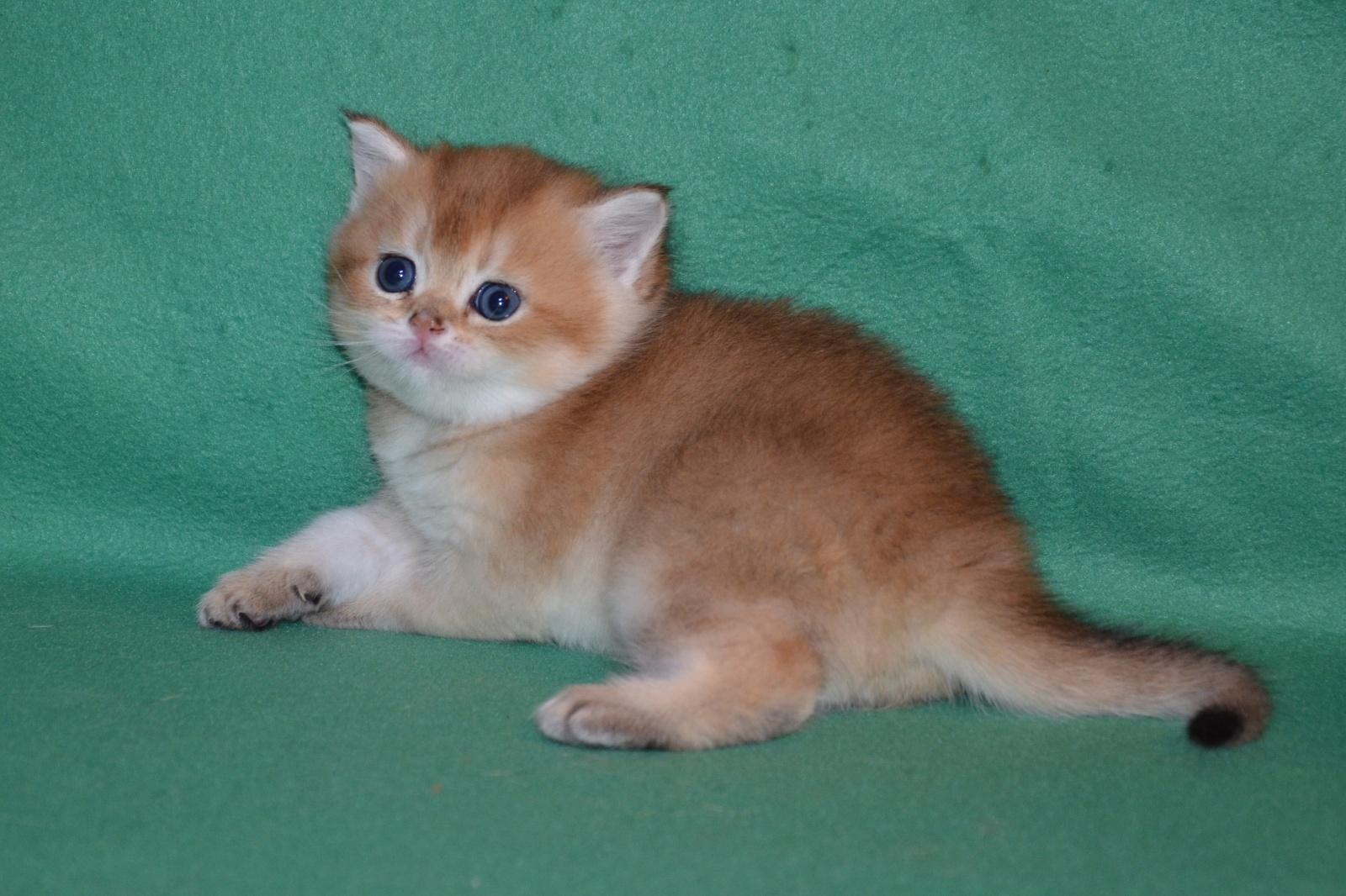 Зеленоглазый кот 7