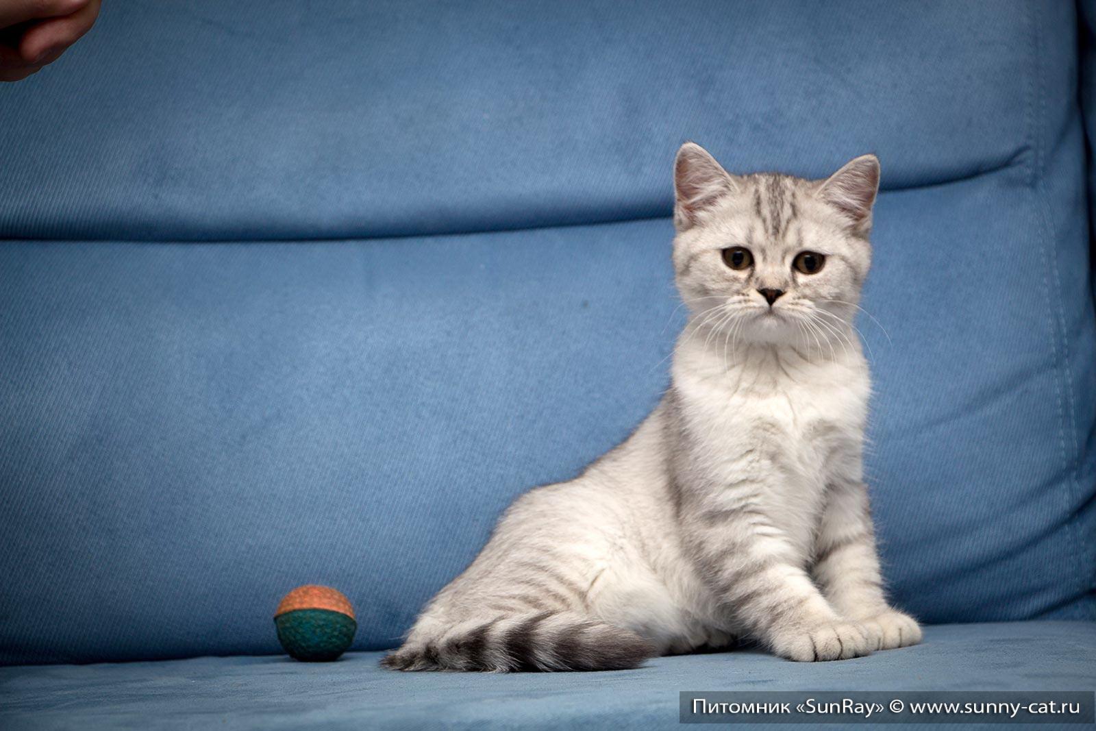 фото котёнок в 3 месяца