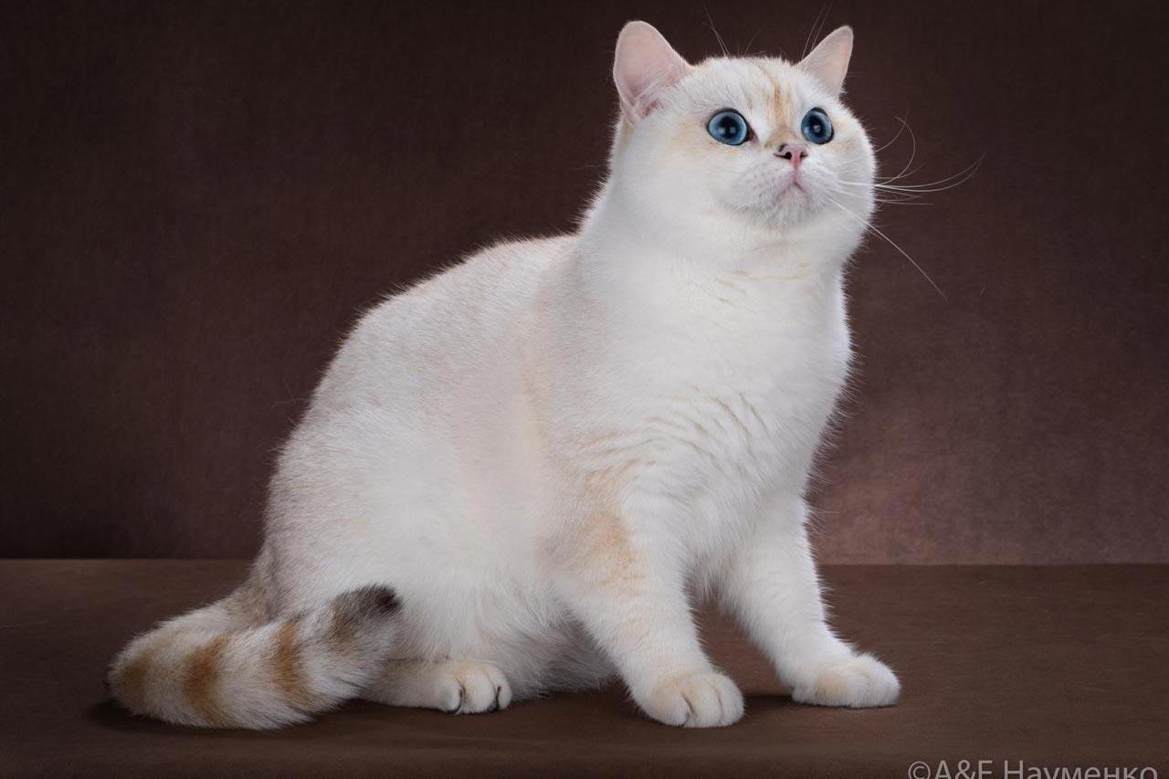 Корм для кошек, купить в интернет-магазине ЗооСтолица