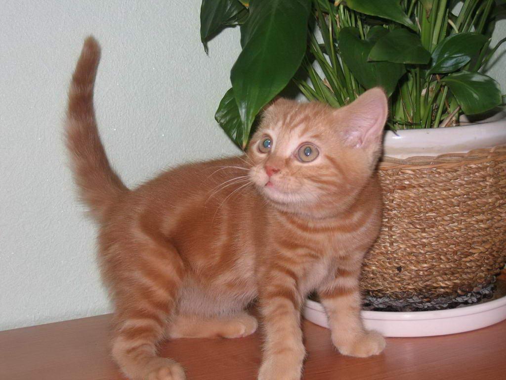 Рыжие котята.