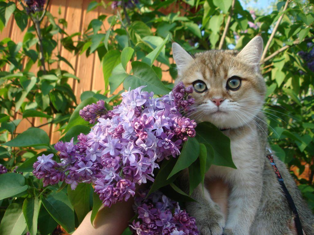 Коты и черемуха