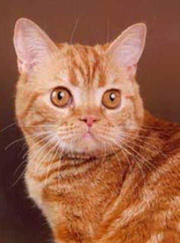 http://www.sunny-cat.ru/datas/users/6-red.jpg