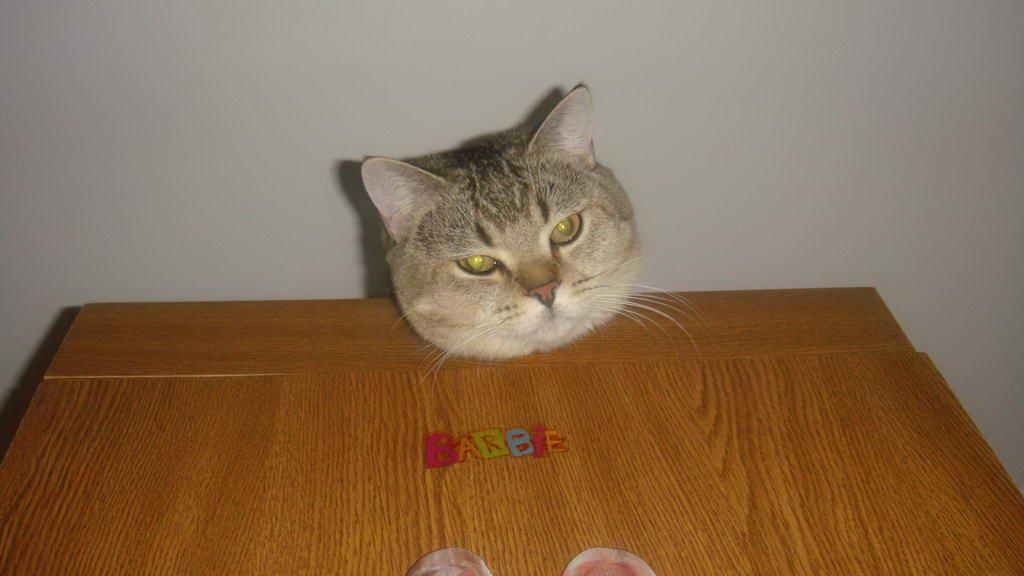 Питомник чеширский кот